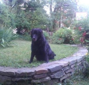 Goodbye, my Friend,  Buddy. Thank You for Making Me a Better Man