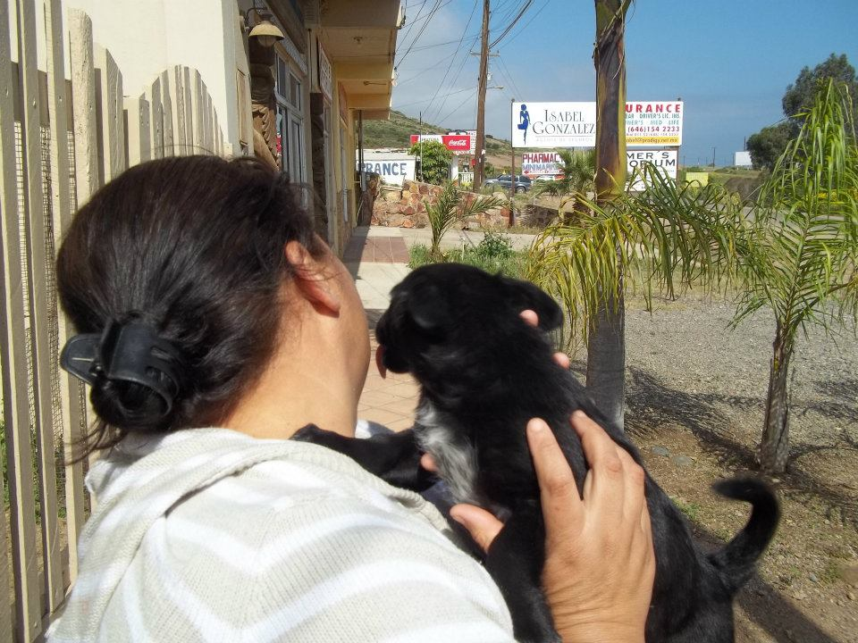 """""""Oh Lamont! Stop!"""" Lamont displaying his shmoozing talents with the woman who ran the Taco stand outside the Santo Paco de Cantu animal rescue operation in Baja California, Mexico, from whence Lamont came"""