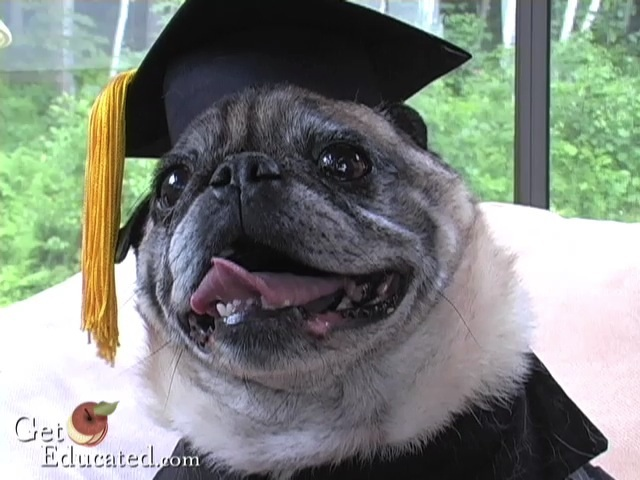 chesTERLUDLOW PUG MBA DEGREE